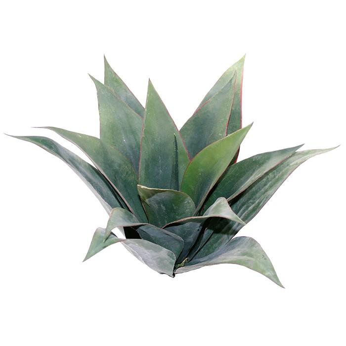 Terrarium Kunstpflanze Agave grün 45 cm Kunstpflanzen