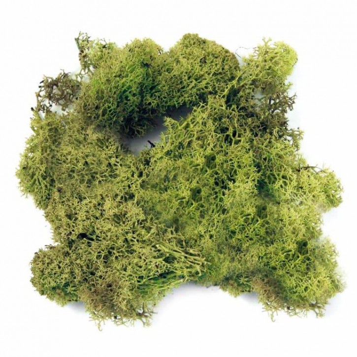 Dragon Island Moos natur und grün 60 g