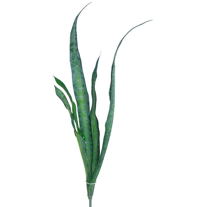 Sanseveria ca. 70 cm