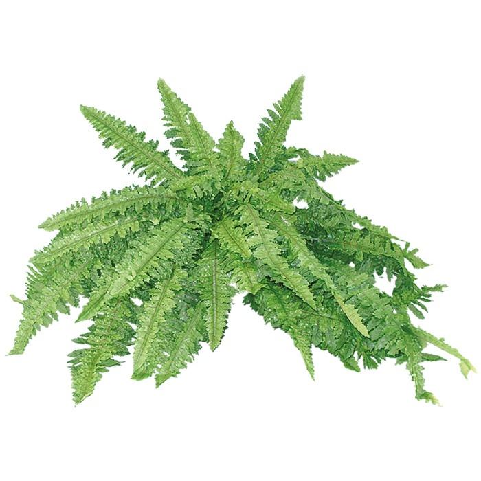 Terrarium Kunstpflanze Waldfarn ca. 70 cm