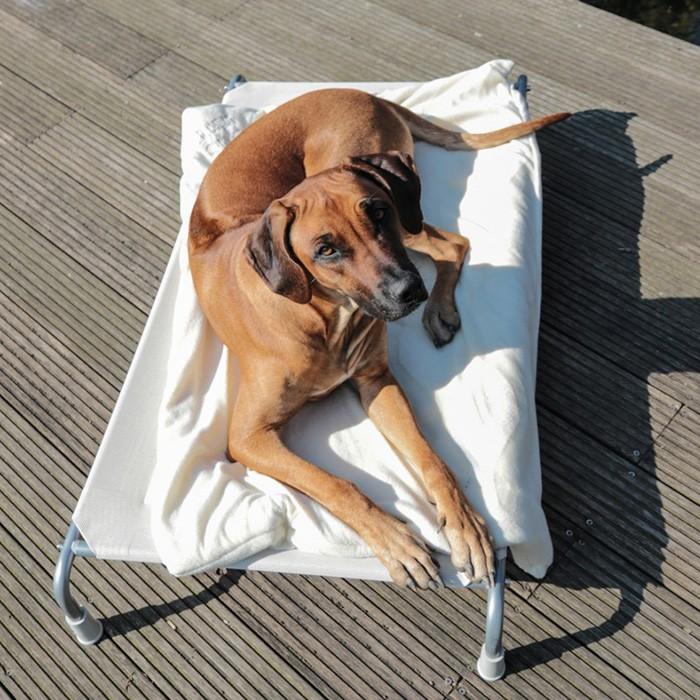 CANIS VERDE Hundebett Hundefeldbett in 3 versch. Größen Farbe: Beige