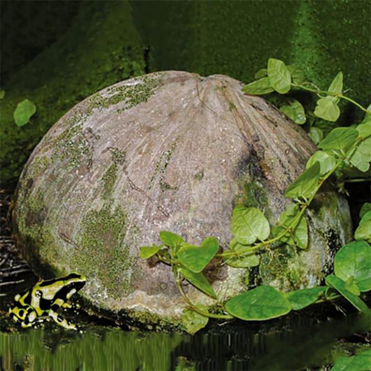 Dragon Kokosnusshalbschale natur mit Außenhaut